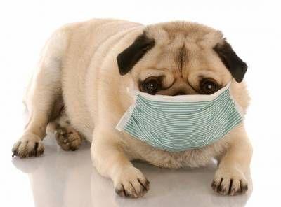 Аллергия у собак: причины, виды и лечение