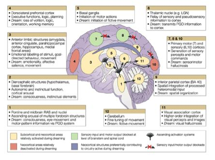 Brain & CN's - Areas assoc with swallowing