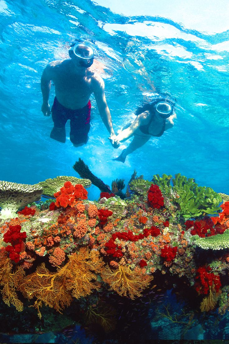 17 Best Images About Key West Snorkeling On Pinterest