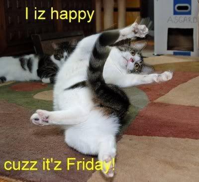 Happy Friday Cat Kitten