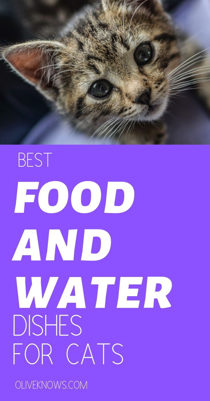Best Food And Water Dishes For Cats Cat Safety Cats Cat Health