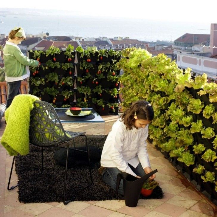 29 best images about creating privacy walls on pinterest for Balcony vegetable garden
