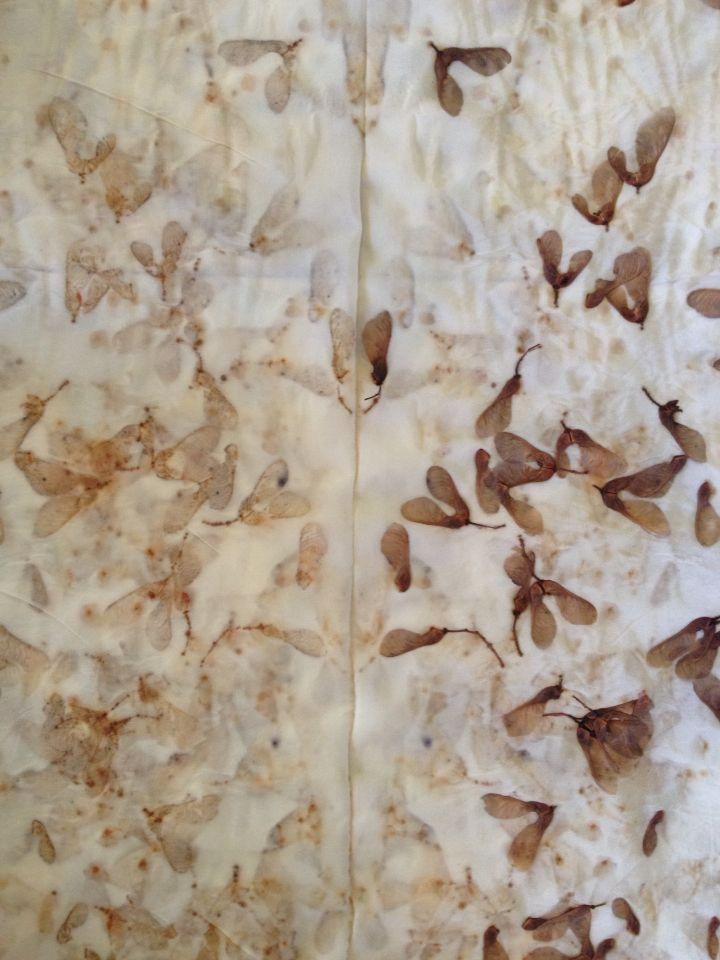 Irene Rasetti   ~Manitoba maple seeds, steamed.~