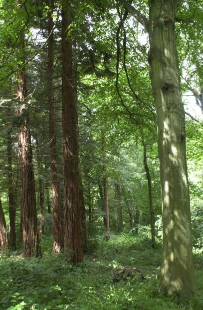 Forestland Evaluations, Buying or Selling Forestland