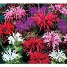 Flower Garden Ideas Northeast best 25+ deer resistant landscaping ideas on pinterest | deer