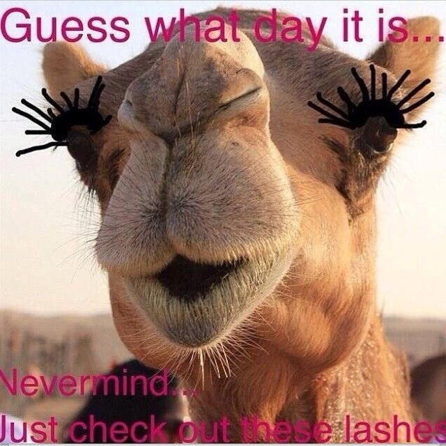HAPPY HUMP DAY! Make your day even better by treating yourself to 3D Fiber Lashes!