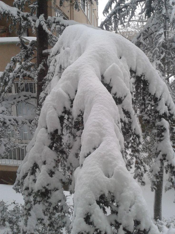 Snow view, Tree