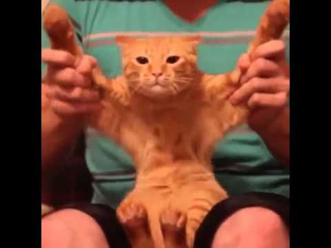 Dubstep Cat (Vine Videos)