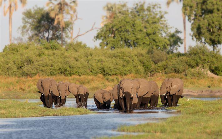 Lataa kuva Norsuja, Afrikka, lake, wildlife, perheen norsuja