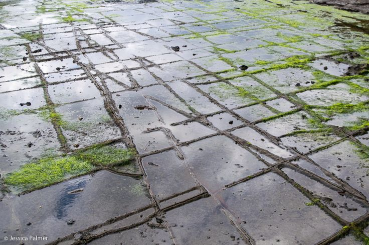 The Tessellated Pavement on the Tasman Peninsula in Tasmania. Click the image above for a list of FREE things to do on the Tasman Peninsula and Port Arthur.