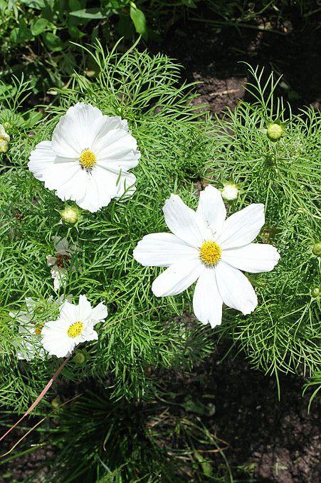 Collectif Les Jardiniers Nomades | LE SYNDROME DE LA PAGE BLANCHE