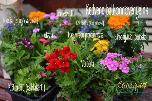 Egész nyáron virágzó balkonnövények | Életszépítők