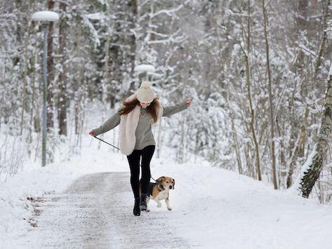 Are Pet-Safe Ice Melts Really Safe?