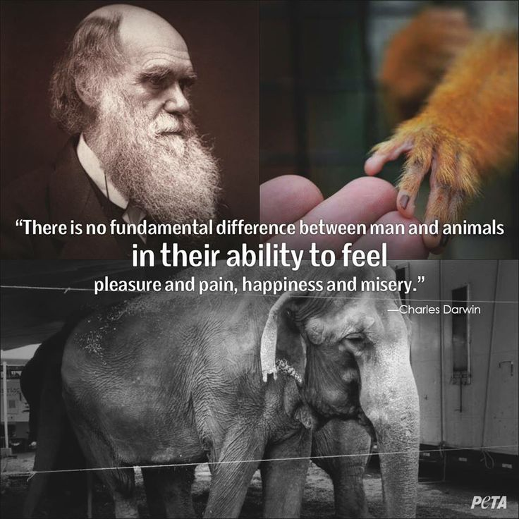 Darwin Quotes: Pin By Rhonda Sherwood On All Life Matters!