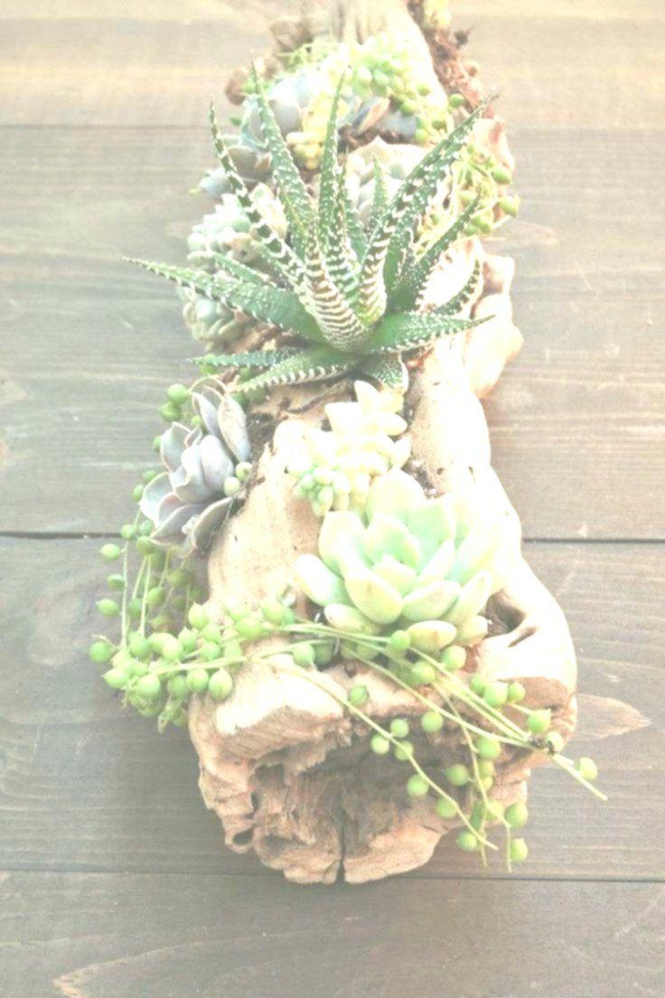Arrosage Cactus Plantes Succulentes Idee Diy Arrangement Original