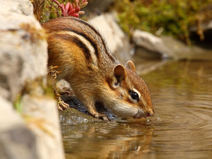Klein, lustig und süß: Zehn Streifenhörnchen