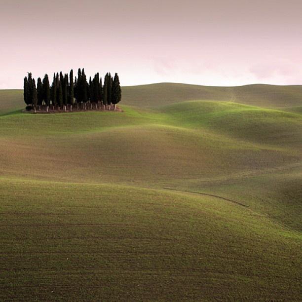 Cipressi, icona toscana [ Original pic @cafelabstudio ] #tuscanygram #tuscanygramers | by tuscanygram