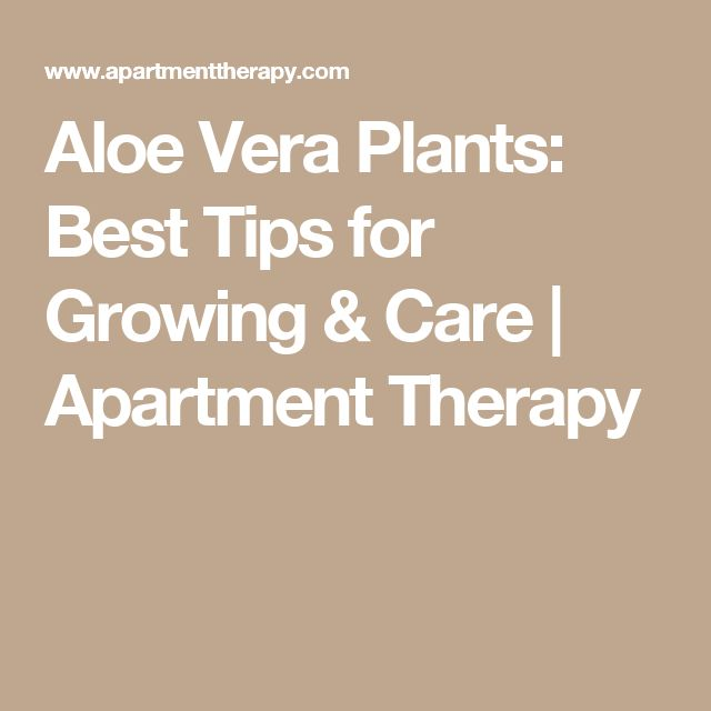 56 best yard idea images on pinterest yard ideas plants and courtyard ideas - Aloe vera plant care tips beginners guide ...