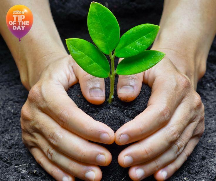 Φύτεψε δέντρα στα σωστά σημεία του κήπου και της βεράντας σου. Το χειμώνα προστατεύουν από το κρύο, ενώ το καλοκαίρι δροσίζουν την ατμόσφαιρα! Ό,τι χρειαστείς για την περιποίησή τους, θα το βρεις στο ekos.gr!