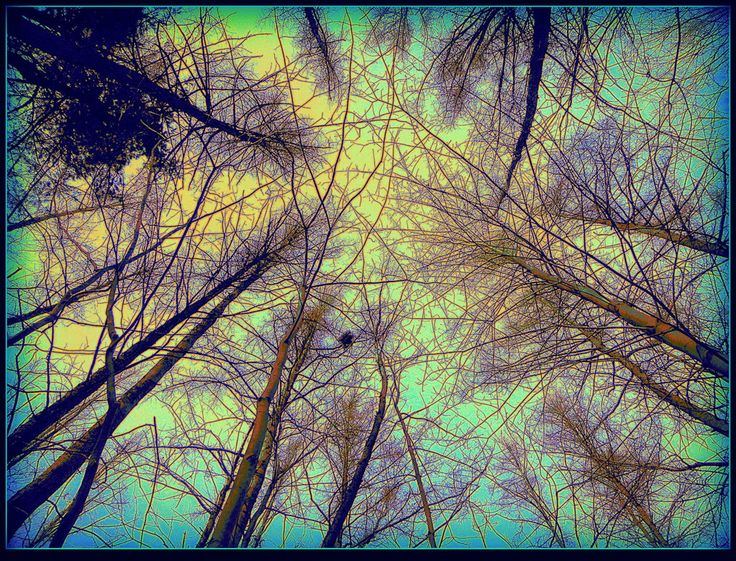 looking_up_in_the_forest_by_surrealistic_gloom-d6dzbu0.jpg (1023×781)