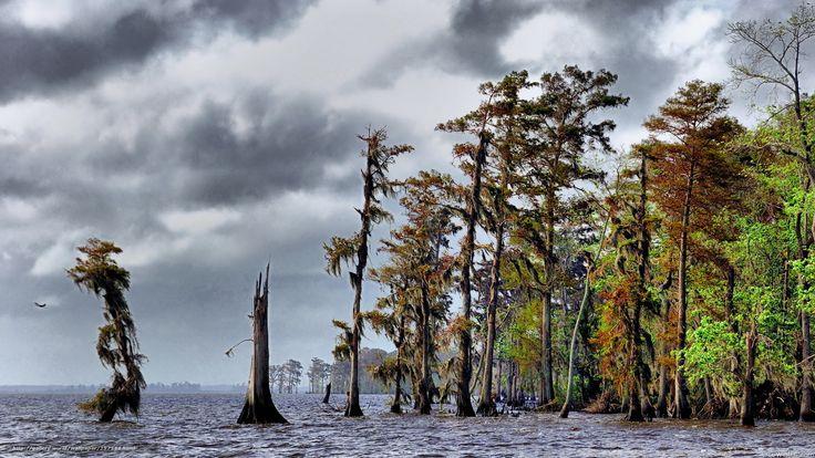 scaricare gli sfondi alberi,  cielo,  natura Sfondi gratis per la risoluzione del desktop 1920x1080 — immagine №257588