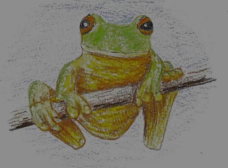 Red eyed Tree Frog, pastel