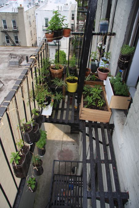 Extreme fire escape garden. What a dedicated gardener and so inventive.