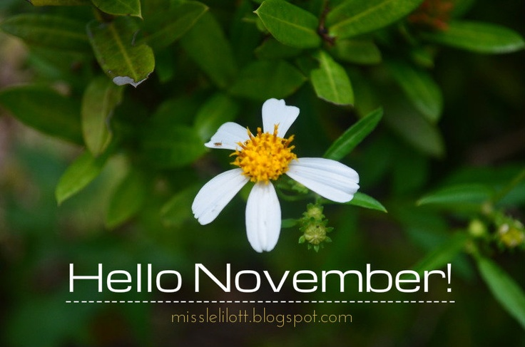 hello.  it's november.  and it's raining.  and i love november and rain.                                     always.  i'm a november girl, remember?                           be nice please.                                   thank you.