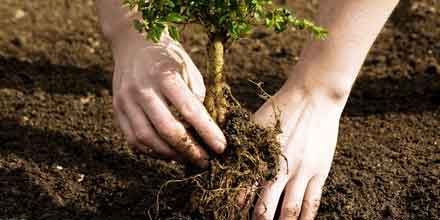 Members receive great pricing & free trees @ arborday.org