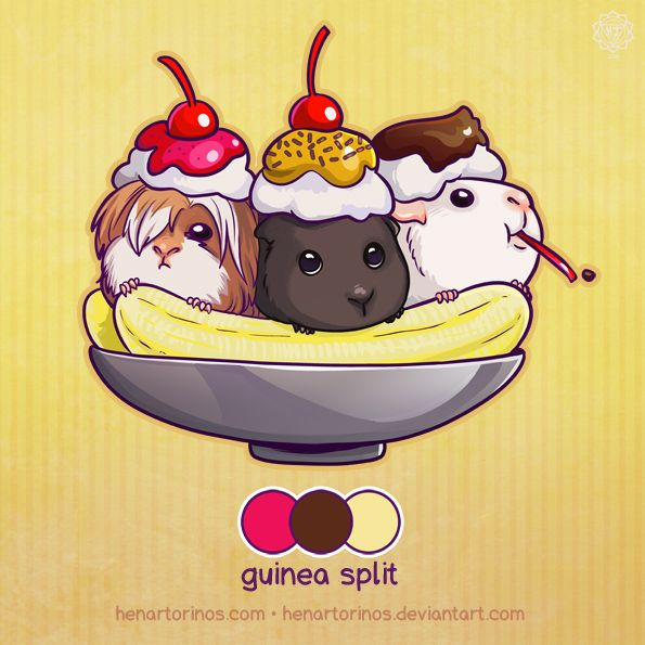 Guinea Pig Split. Someone already ate the cherry!