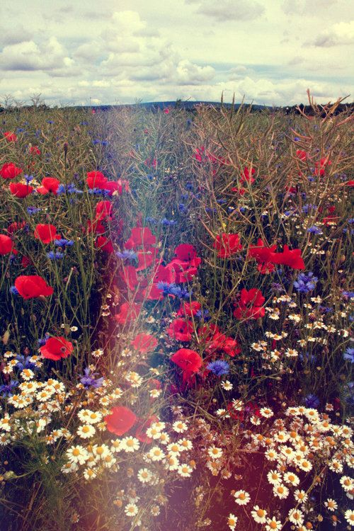 #day #flowers #field