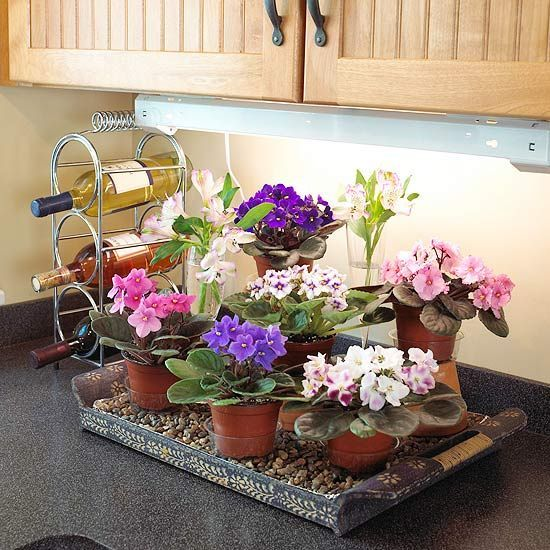 15 Best African Violet Plant Stand Display Images On