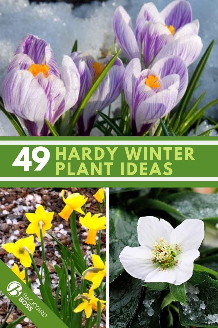 49 Of The Best Winter Plant Ideas 27 Is Perfect Cold Weather Flowers Winter Flowers Garden Winter Plants