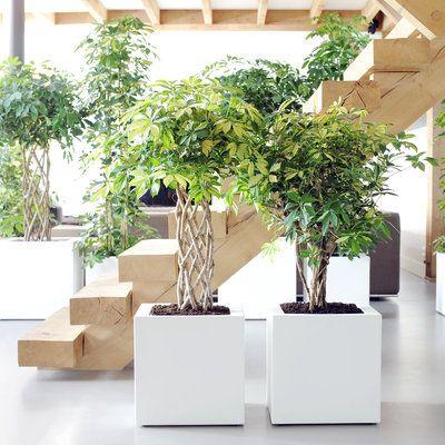 Les 25 meilleures id es de la cat gorie plante for Palmier plastique ikea