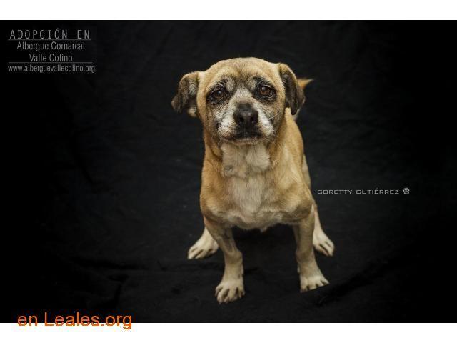 Franki Adoptado Albergue Valle Colino Asociación Protectora De Animales Perros En Adopcion Busco Perro