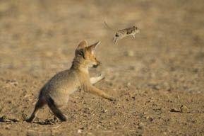 Hannes Lochner Wildlife & Nature Photography