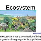 It+has+terrestrial+and+aquatic+ecosystems+and+food+webs+integrated+into+one+PowerPoint....