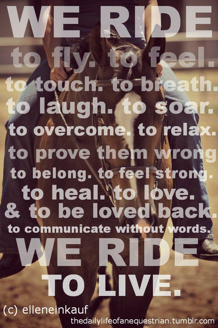 Pics photos quote i wrote for my horse com account s equestrian - Image Result For Horse Riding Quotes