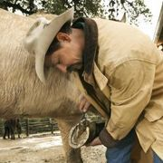 How to Make a Homemade Thrush Treatment for Your Horse | eHow