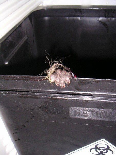 The hand of an unknown monkey at testing facility, grasping the side of the trash can after they discarded her for dead.