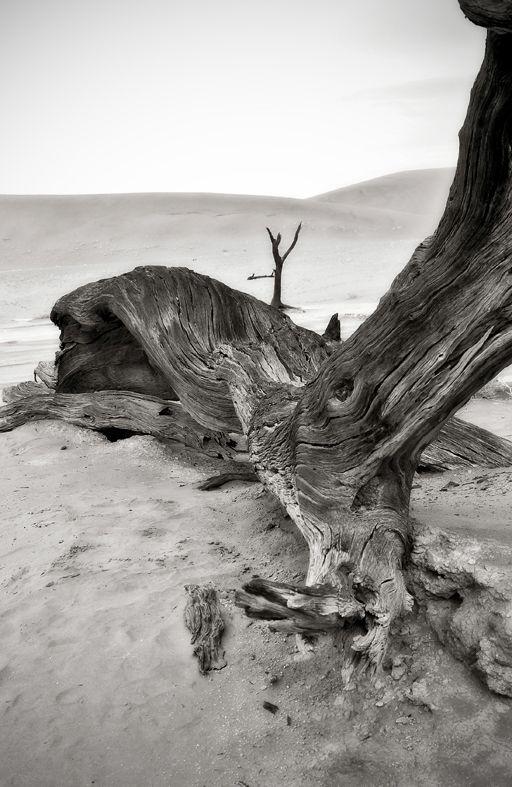 Death vlei in Namibië