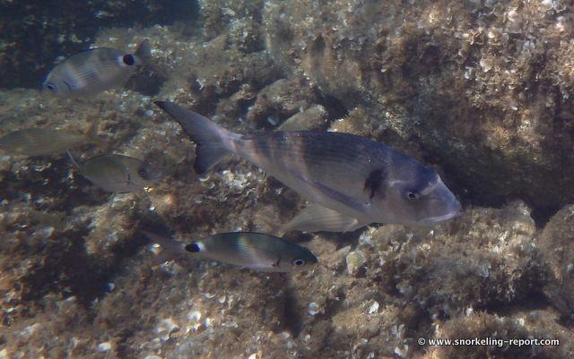 Snorkeling Report Lavezzi Islands   Corsica