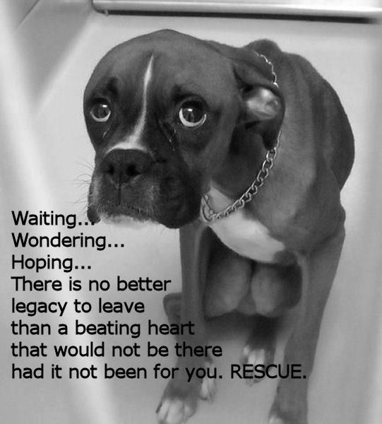 I got my Jace from a rescue organization Mountain State Boxer Rescue was amazing! The work they do is inspiring.