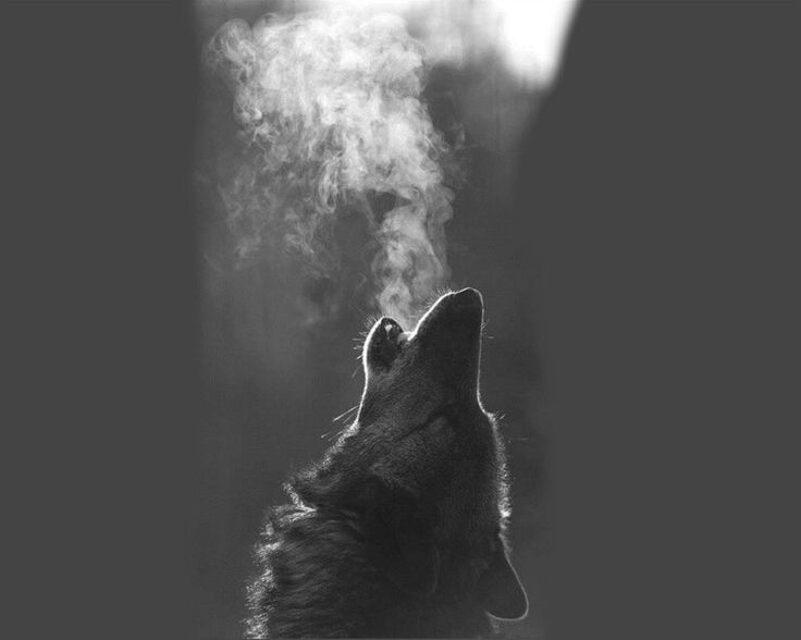Howling Wolf....