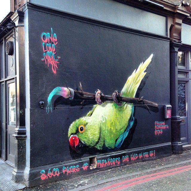 Louis Masai in London  8,600 pairs parakeets wild in UK?! #streetart