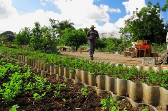 Kuba, ahol a városi kertészet a boldogság záloga   Sokszínű Vidék - Ahol a jó élet lakik