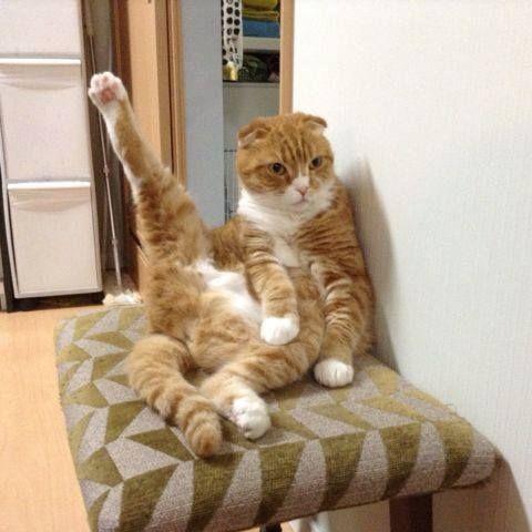 Yoga Frate  - Yoga frate! 2015 #pozeamuzantecuanimale #pisici