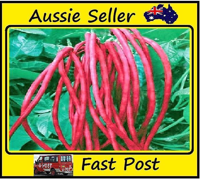 20 Pcs Giant Red Bean Easy Grow Home Garden