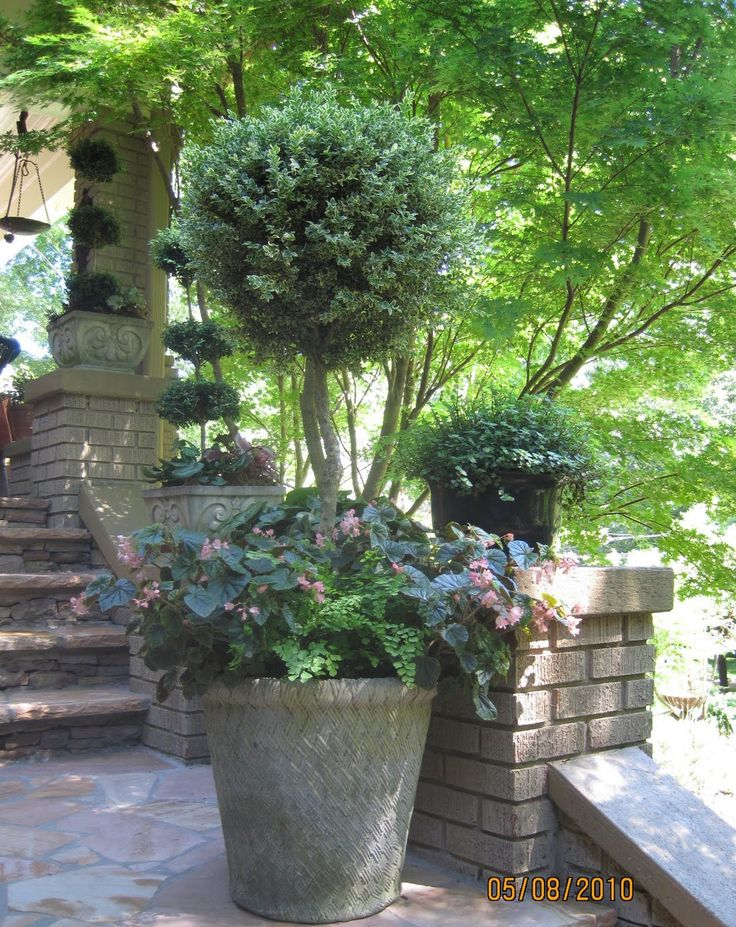 17 best images about topiary trees on pinterest home for Garden topiary trees