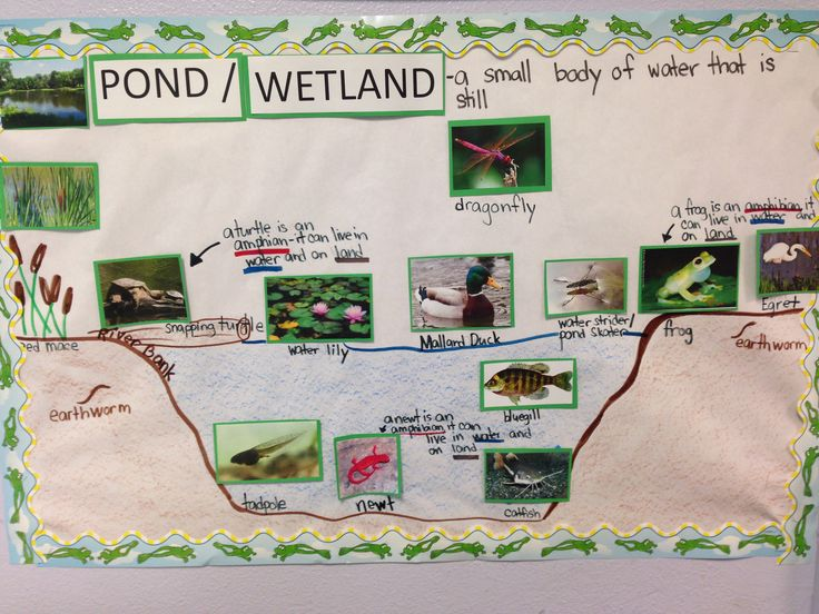 "Pond habitat pictorial (diagram) input. This concept by G.L.A.D introduces tough vocabulary for kids paired with visual representation. No need to ""dumb"" down curriculum."